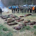 Pokot po polowaniu Nowa Wieś-obwód 344