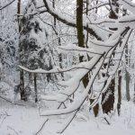 Zima na trzech lipach