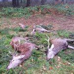 Polowanie hubertowskie 2015/16-obwód 344